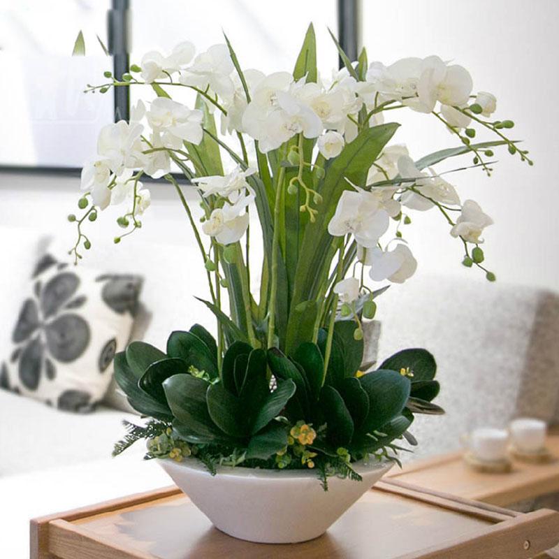 White-font-b-Phalaenopsis-b-font-font-b-Orchid-b-font-Seeds-Flower-Seeds-Indoor-Bonsai